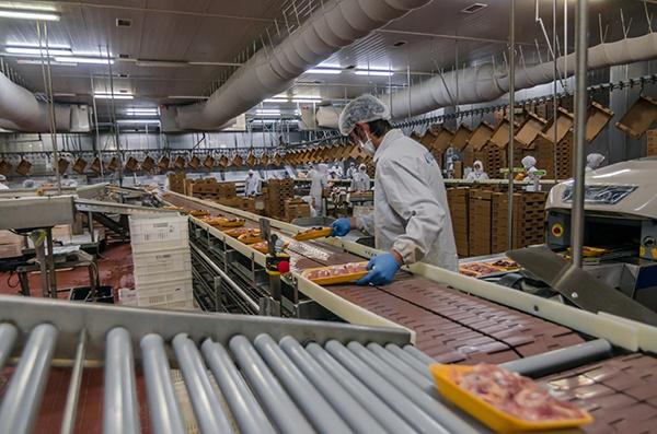 fiberglass food processing plant